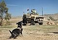 Combat Fetch (8610184580).jpg