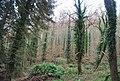 Combe Meadow - geograph.org.uk - 1659004.jpg