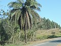 Coqueiro - panoramio (3).jpg