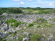 Coral pinacles on Nauru.jpg