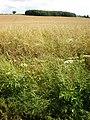 Countryside around Rudston - geograph.org.uk - 1408763.jpg