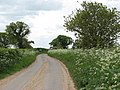 Cow parsley flowering in abundance - geograph.org.uk - 1295143.jpg