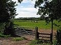 Cows grazing, Aston Ingham - geograph.org.uk - 492833.jpg