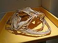 Crâne de baudroie-Musée zoologique de Strasbourg.jpg