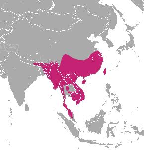 Crab-eating Mongoose area