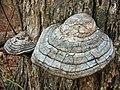 Cracked Mushroom2.jpg
