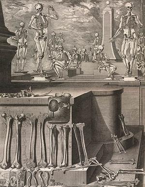 Crisóstomo Martinez - Skeletons and Bones, by Crisóstomo Martinez, Biblioteca Nacional de España