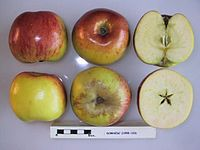 Cross section of Domnesc, National Fruit Collection (acc. 1958-103).jpg