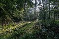 Dülmen, Naturschutzgebiet -Am Enteborn- -- 2014 -- 0208.jpg