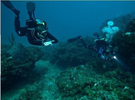 DIR Divers Sandra edwards 2010