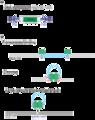 DNA Transposon.png