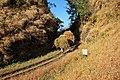Dastoori Naka,Matheran - panoramio (87).jpg