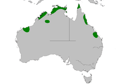 Mapa de distribución de Dasyurus hallucatus