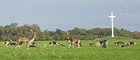 Deer by papal cross.jpg