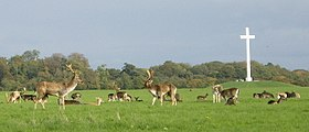Deer by papal cross.jpg