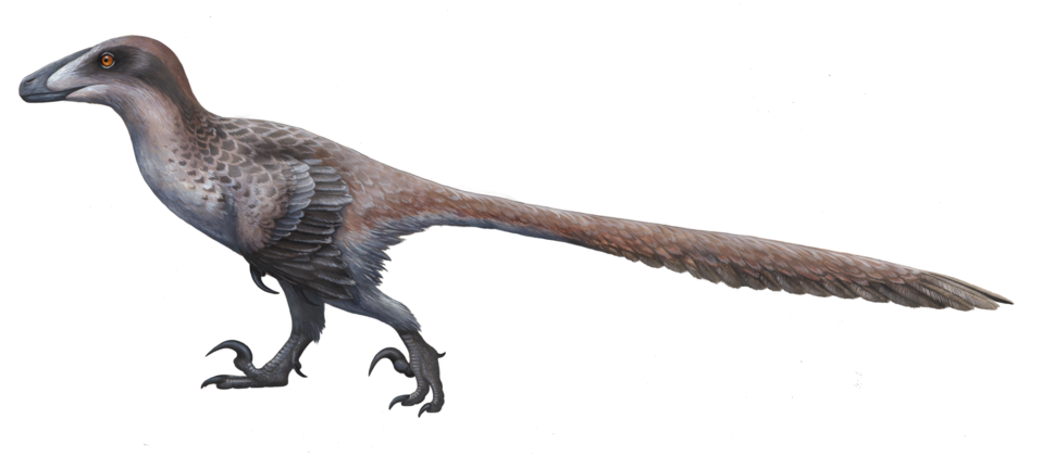 Deinonychus ewilloughby