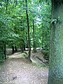 Denzlinger Wald - panoramio (1).jpg