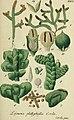 Deutschlands flora in abbildungen nach der natur (1832) (20701455330).jpg