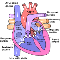 Diagram of the human heart (cropped) el.png