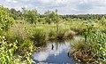 Diakonievene. Natuurgebied van It Fryske Gea. 31-05-2019. (actm.) 06.jpg