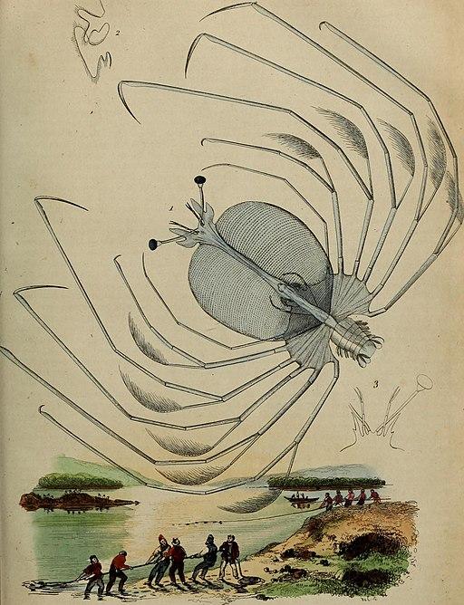 Dictionnaire pittoresque d'histoire naturelle et des phénomènes de la nature (1838) (14778916884)