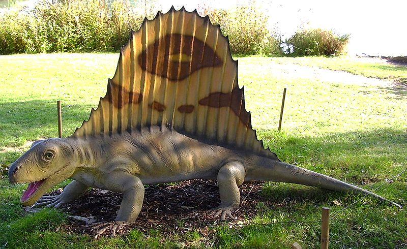File:Dimetrodon Nachbildung.jpg