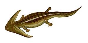 Lepospondyli - Diplocaulus, a nectridean