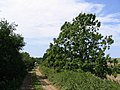 Dismantled railway line near Mappercombe - geograph.org.uk - 532505.jpg