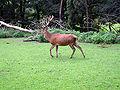 Dortmund-Zoo-IMG 5475-a.jpg