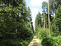 Dresdner Heide-Kreuzung Lerchenweg 2016-025.1.jpg