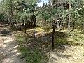 Droga do opuszczonej bazy wojskowej- pozostałości po ogrodzeniu sierpień 2011r. - panoramio.jpg