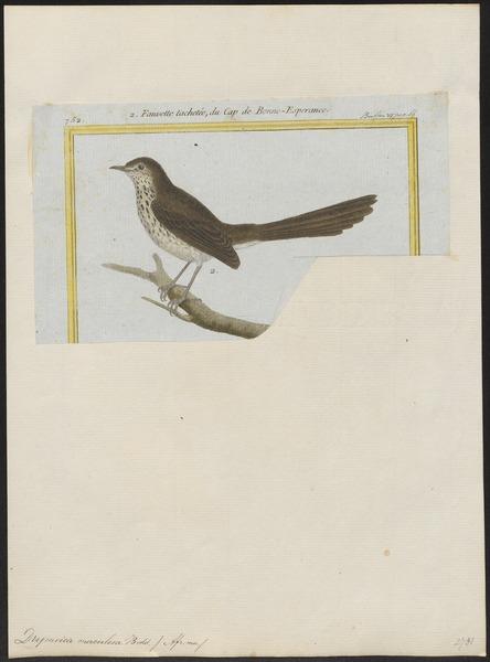 File:Drymoica maculosa - 1700-1880 - Print - Iconographia Zoologica - Special Collections University of Amsterdam - UBA01 IZ16200017.tif