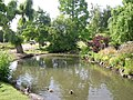 Ducks on a pond - geograph.org.uk - 1459514.jpg