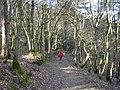 Durford Wood - geograph.org.uk - 421915.jpg