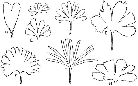 EB1911 Palaeobotany - leaves of Ginkgoales.jpg