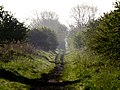 Early Morning on the old Hull to Withernsea Railway Track - geograph.org.uk - 794085.jpg