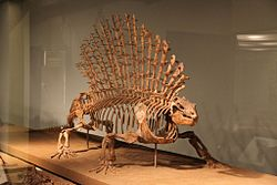 meaning of edaphosaurus