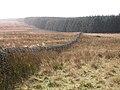Edge of large plantation on Denton Fell - geograph.org.uk - 603283.jpg