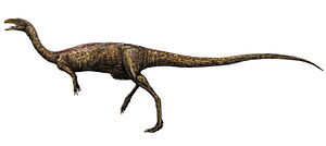 Elaphrosaurus - Restoration of Elaphrosaurus with head and hands based on the related Limusaurus