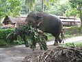 Elephant Carrying its food.jpg