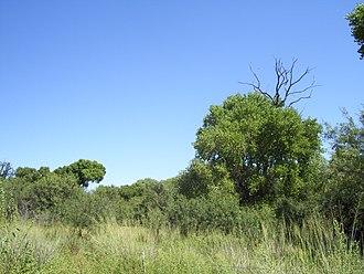 Las Cienegas National Conservation Area - Image: Empire Ranch Arizona Cienega Creek Cottonwoods September 2007