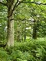 Endinger Bruch 24-08-2008 064.jpg