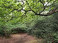 Epping Forest 20170727 112710 (49374841047).jpg
