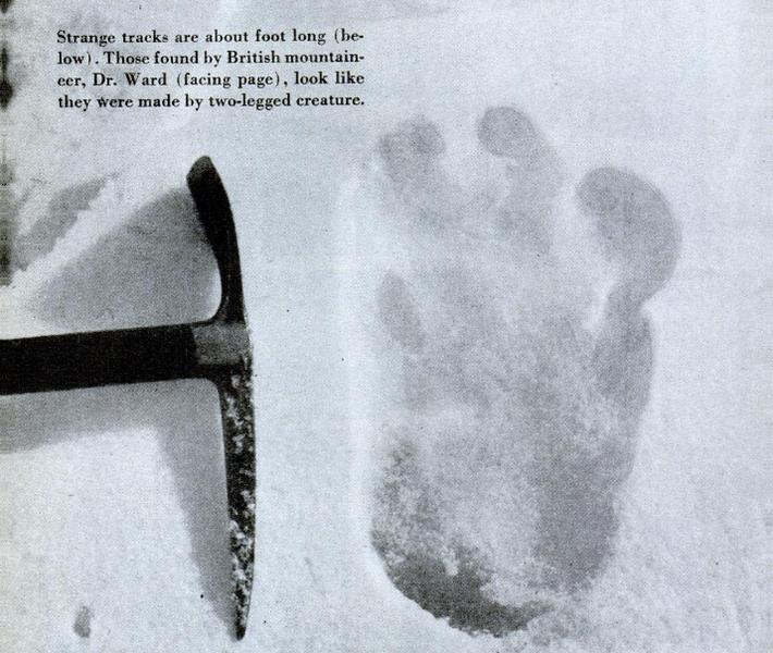 File:Eric Shipton yeti footprint.png