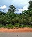 Estrada de Minas Gerais - panoramio (7).jpg