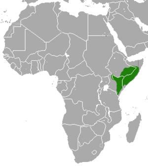 Ethiopian dwarf mongoose - Image: Ethiopian Dwarf Mongoose area