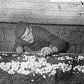 Ex-oesterkwekers in Yerseke halen de eerste champignons binnen, Marinus de Munck, Bestanddeelnr 916-0709.jpg