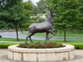 Fairfield Stag.png
