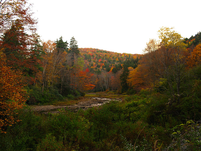 File:Fall-trees-creek-mountains - West Virginia - ForestWander.jpg