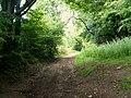 Farm Track - geograph.org.uk - 1367163.jpg